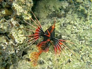 Line-fish-v2-web